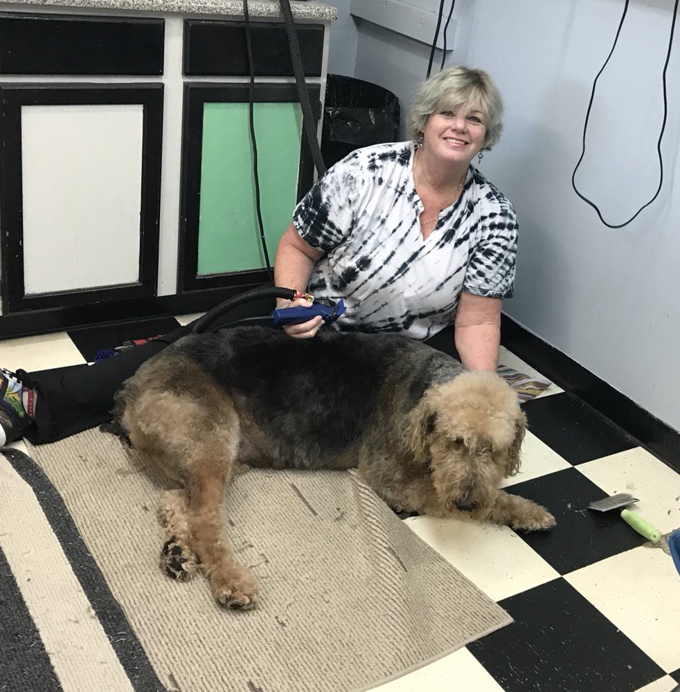 All Around Pet Care: 1268 S Highland Ave, Clearwater, FL