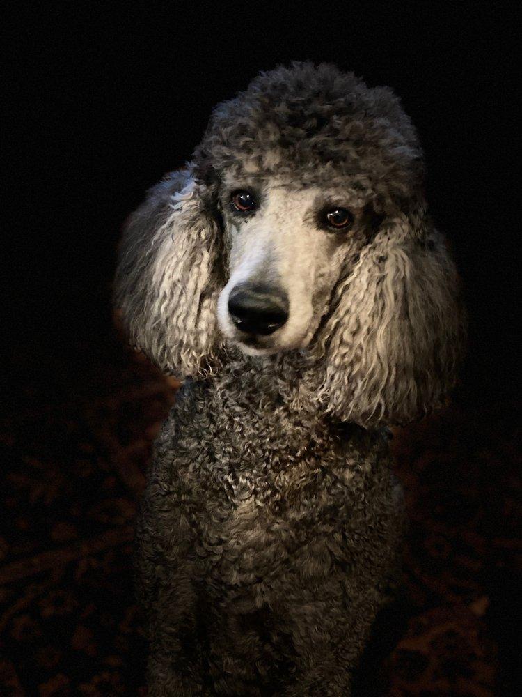 Diana's Country Dog Grooming: 310 N 300 E St, Beaver, UT