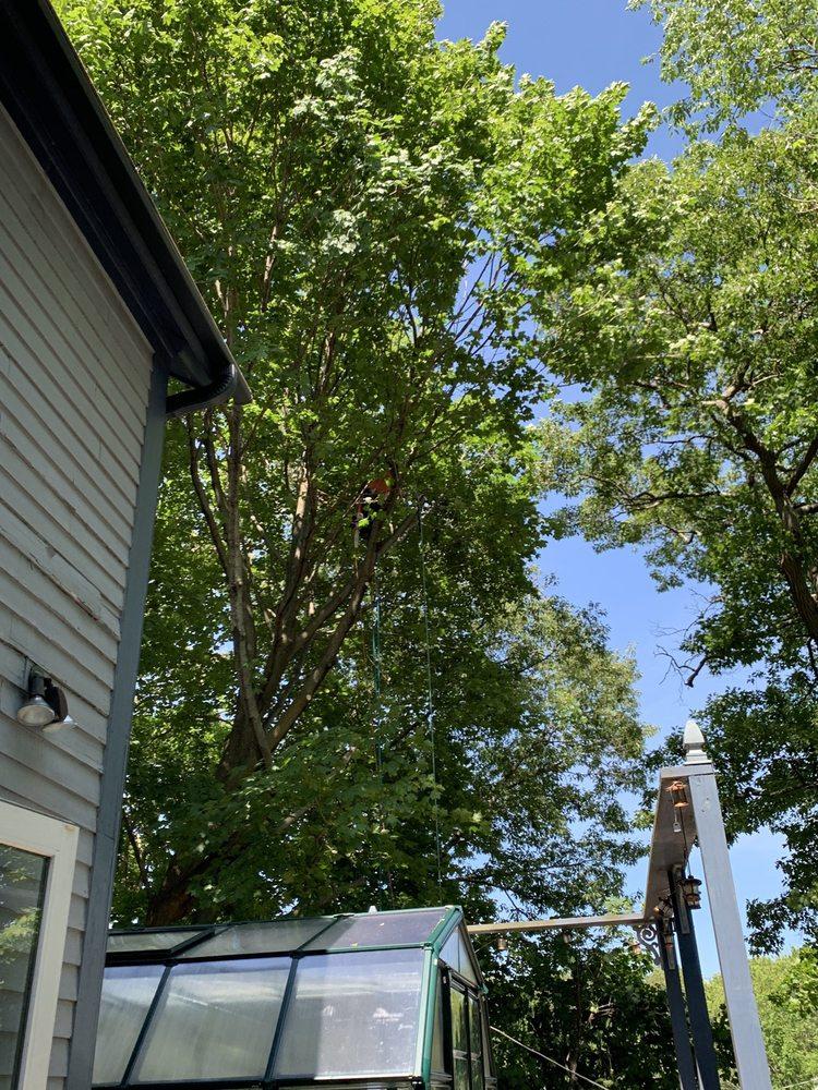 RT Trees