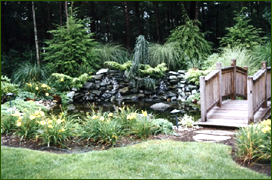 Macchione's Landscaping