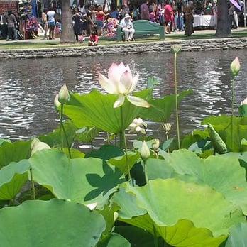 Lotus Festival Echo Park 284 Photos 36 Reviews Festivals 751