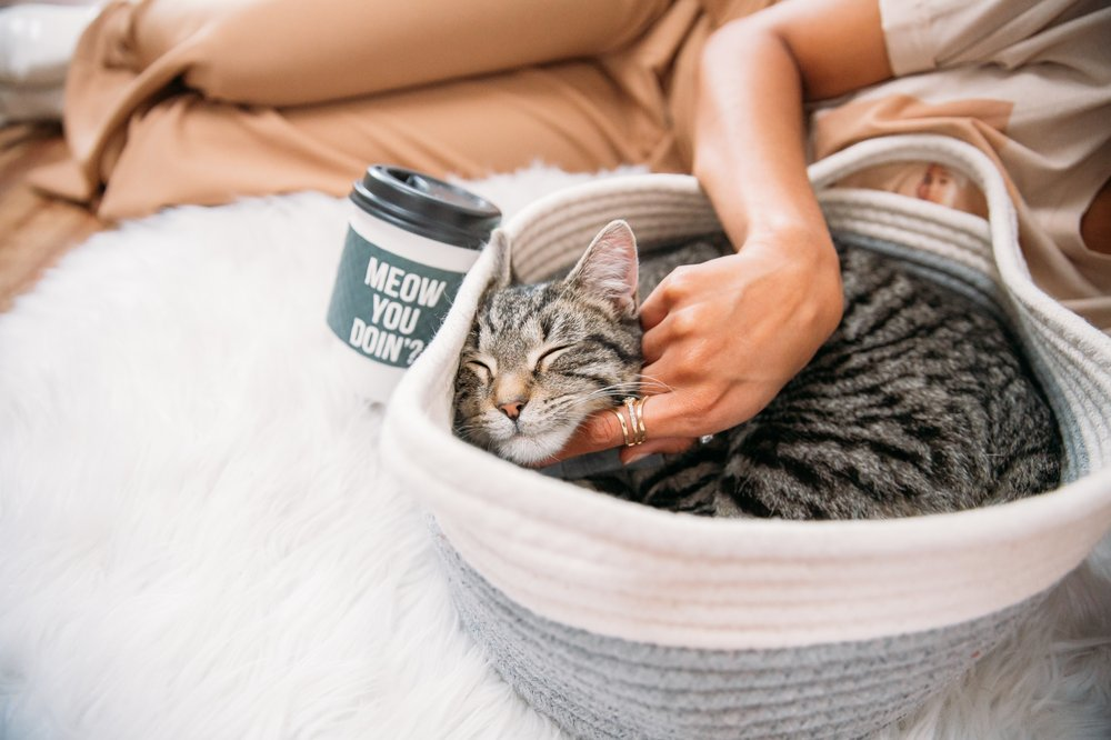 Crumbs & Whiskers | A Cat Cafe Experience.
