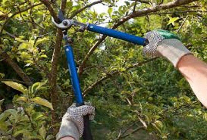 Double A Tree Service: 2231 Rosegarden Dr, Saint Louis, MO