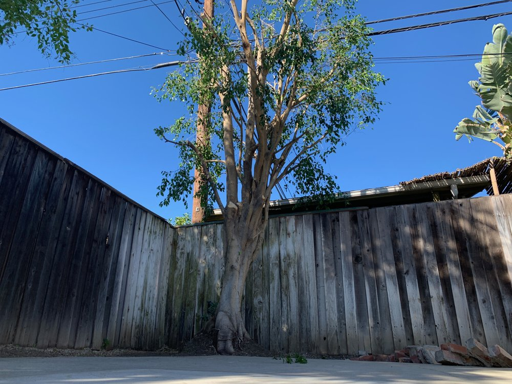 Valley Green Tree Services