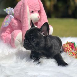 Top 10 Best Free Puppies In Dallas Tx Last Updated April 2019 Yelp