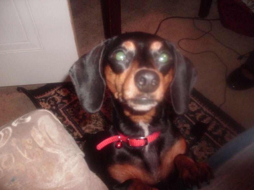 Harper's Animal Clinic: 509 W Forsyth St, Americus, GA