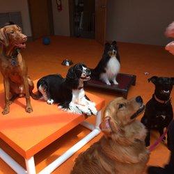 dog daycare ri