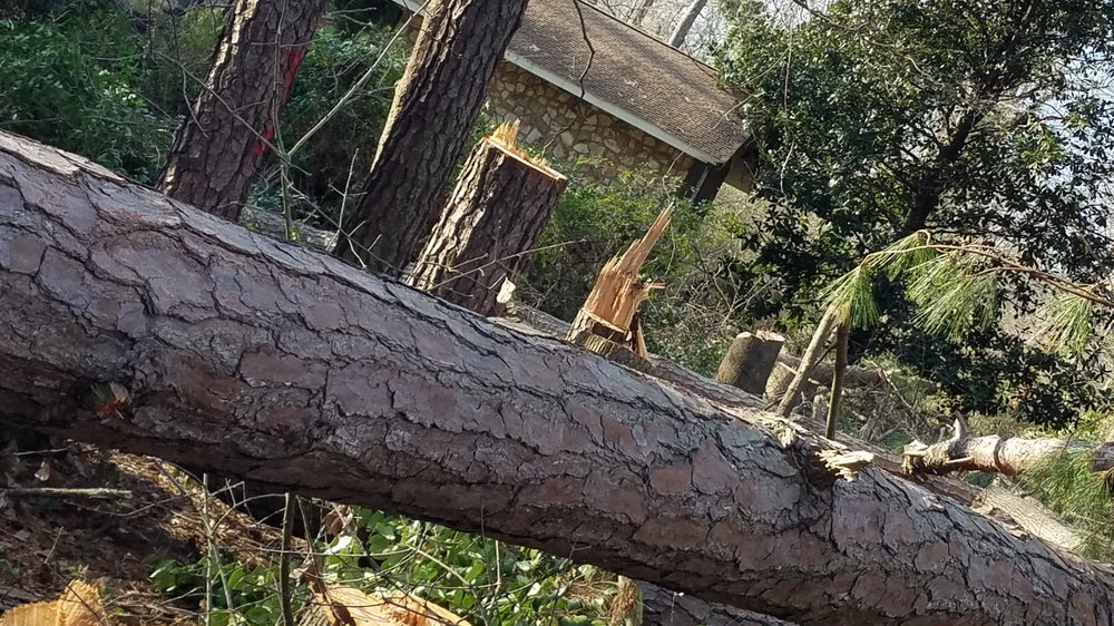 McClarin Tree Services & Landscape: Goldsboro, NC