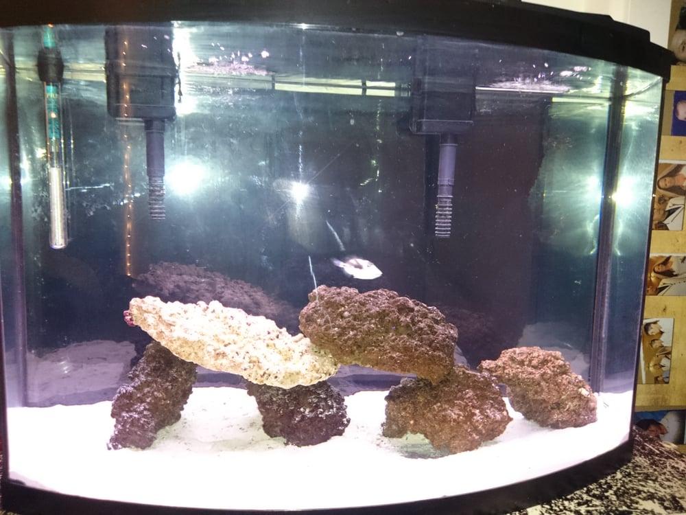 Photo Of Trop Aquarium Las Vegas Nv United States My Tank