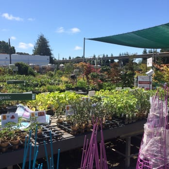 Evergreen Nursery 122 Photos 87 Reviews Nurseries Gardening 350 San Leandro Blvd Ca Phone Number Yelp