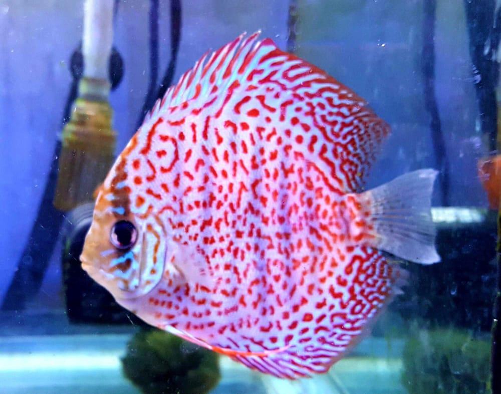 School of Fish: 1655 Boston Rd, Springfield, MA