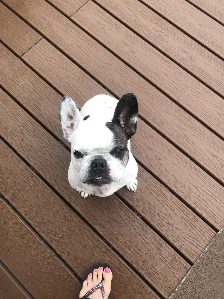 Bow Wow Dog Walking & Pet Sitting: Lakewood, IL