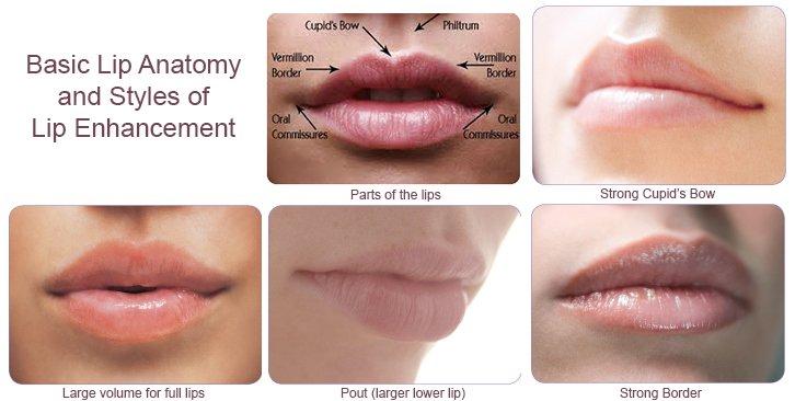 Anatomy Of Lips Yelp
