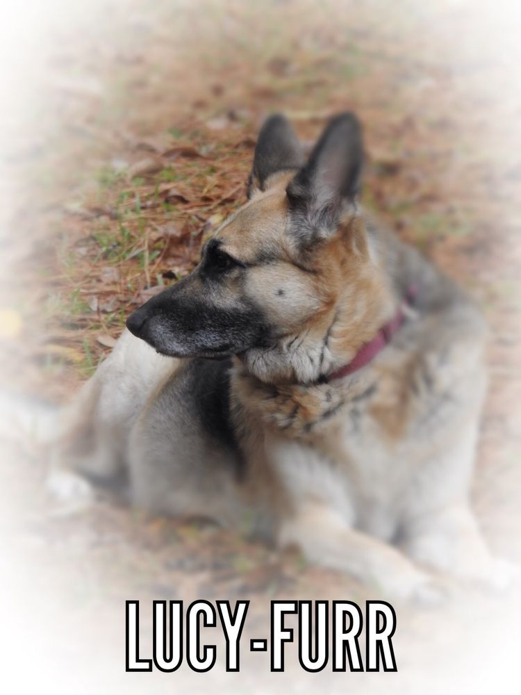 All Pets Crematory: 2377 Hwy 362, Cottonport, LA