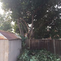 Attirant Photo Of Arroyou0027s Gardening Services   San Jose, CA, United States. Back  Yard