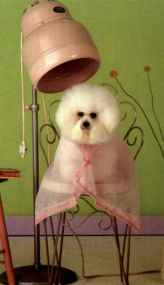 Perfect Paws Pet Spa