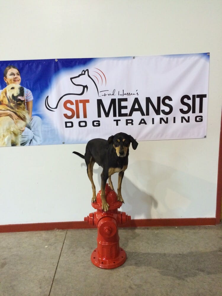 Sit Means Sit Dog Training Collar Reviews
