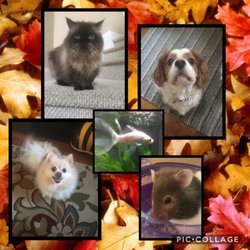 Photo Of Peppy Pets   Garner, NC, United States. All Creatures, Great