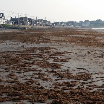 Photo Of Long Sands Beach York Me United States Seaweed Left To