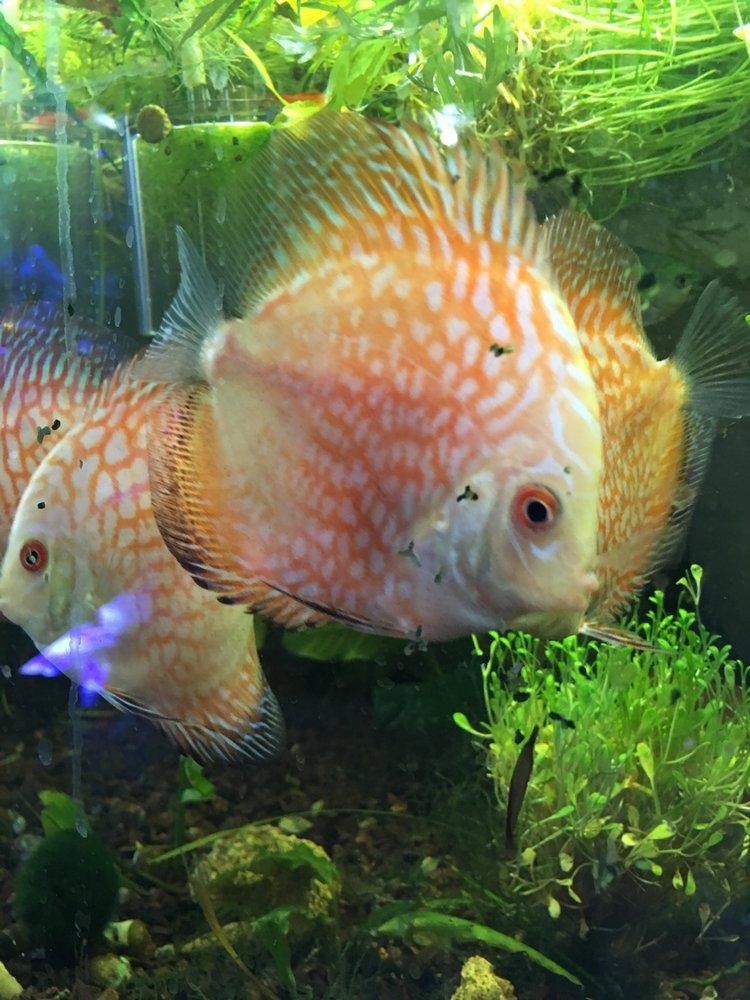 Fish Frenzy: 14 Main St, South Hadley, MA