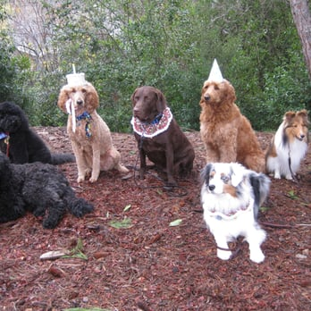 Dog Obedience Training South San Francisco