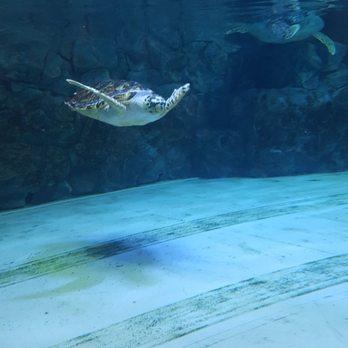 SEA LIFE Grapevine Aquarium - 234 Photos & 155 Reviews ...