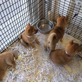 Just Puppies 62 Photos 38 Reviews Pet Stores 1922 E Colonial