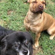Samuel Pet Care - 10 Photos - Dog Walkers - Bridgeport, CT - Phone