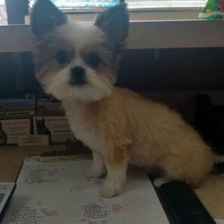 Adorable dog grooming 14 reviews pet groomers 2683 e 120th ave photo of adorable dog grooming thornton co united states solutioingenieria Gallery