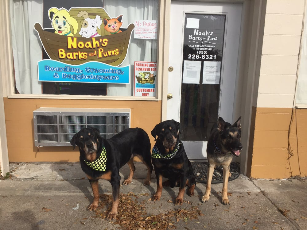 Noah's Barks & Purrs: 107 Eglin Pkwy SE, Fort Walton Beach, FL