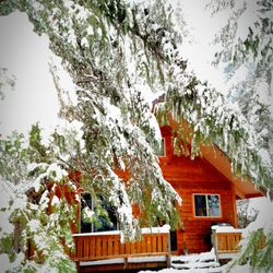 Betsy's Cabins at Mount Rainier - 2019 All You Need to Know
