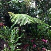 Foster botanical garden 940 photos 109 reviews botanical gardens 180 n vineyard blvd for Foster botanical garden honolulu