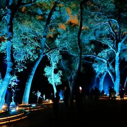 Enchanted forest of light at descanso gardens 224 - Descanso gardens enchanted forest of light ...