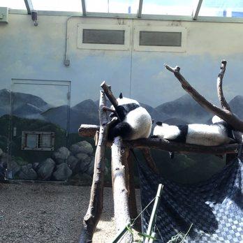 Zoo Atlanta - 1283 Photos & 452 Reviews - Zoos - 800