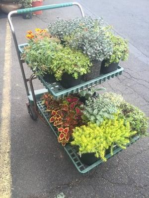 Primex Garden Center 435 W Glenside Ave Glenside, PA Landscaping ...