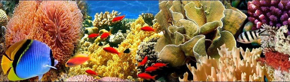 Aquarium Concepts Aquariums Reviews Wilmington De