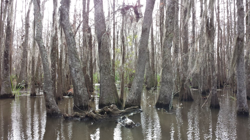 How Far Is Honey Island Swamp From New Orleans