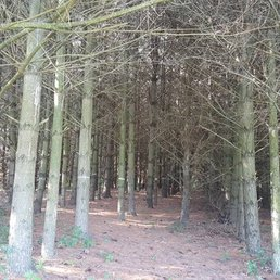 Nature pines nudist colony