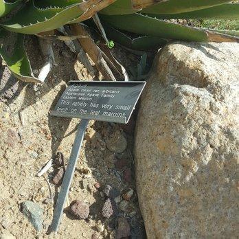 Photo Of San Diego Botanic Garden   Encinitas, CA, United States.  Mislabeled Agave