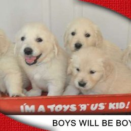 Spring Grove Puppy Paws - Request a Quote - (New) 10 Photos