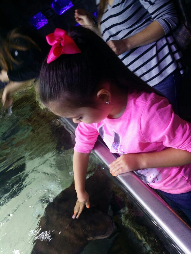 Petting The Stingrays Yelp