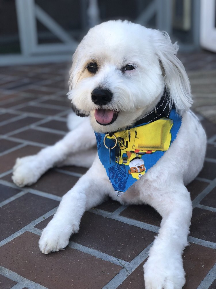 Lucky Paws Grooming: 18050 Magnolia St, Fountain Valley, CA