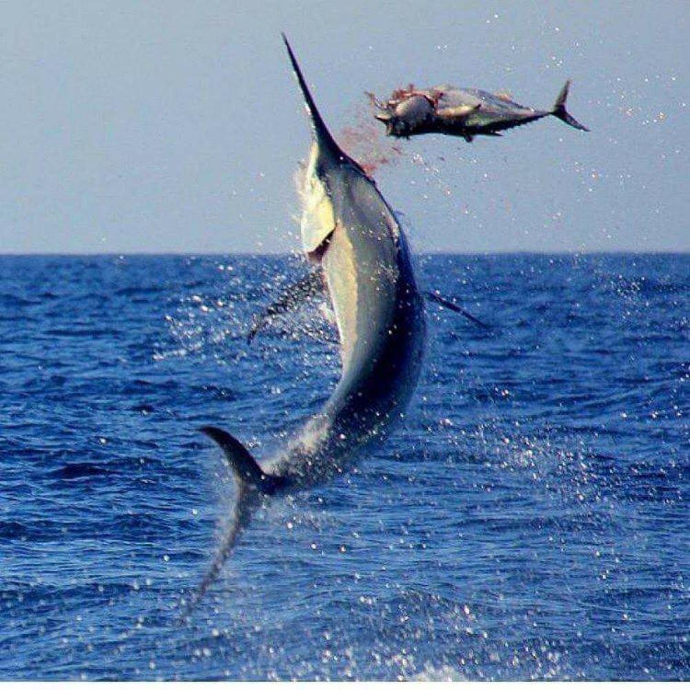 Carolina Girl Sportfishing: 58058 Nc Hwy 12, Hatteras, NC