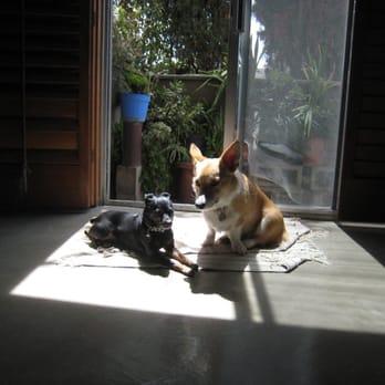 Dog Remedy Behavioral Training