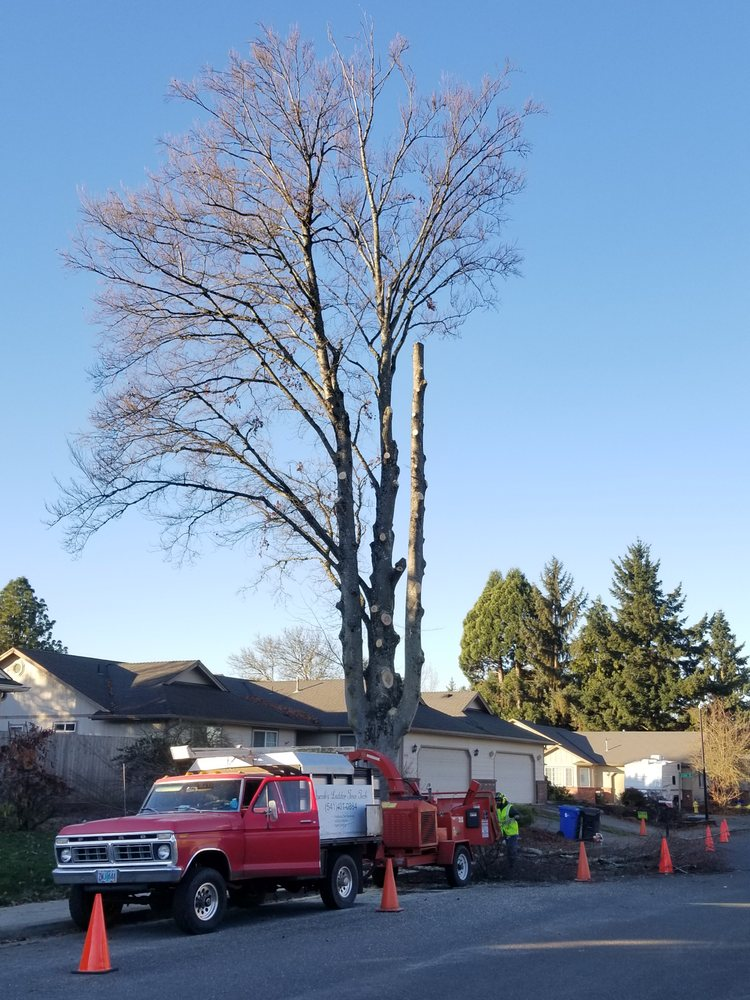 Jacob's Ladder Tree Tech: 415 Russell St, Lebanon, OR