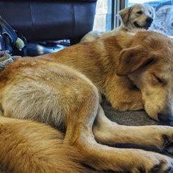 Take Me Home Pet Rescue - (New) 12 Photos & 11 Reviews - Animal