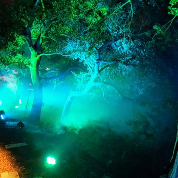 enchanted forest of light reviews