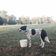 Two Rivers Dog Park Nashville Tn