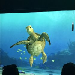 Turtle Talk with Crush - (New) 31 Photos & 59 Reviews