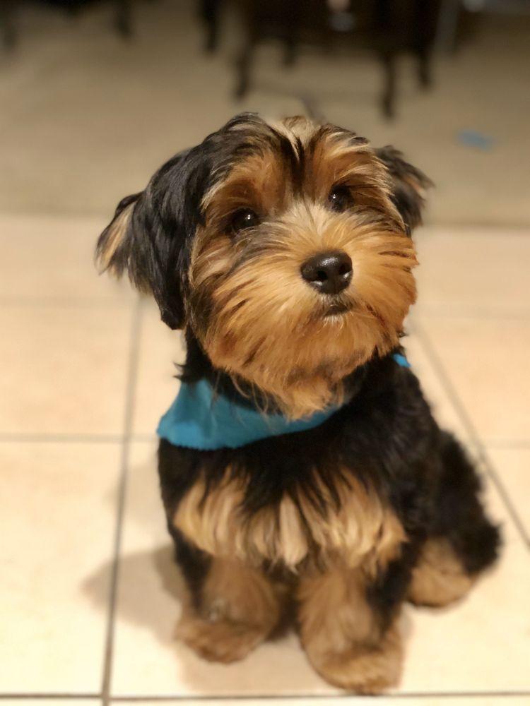 La Bone Pet Spa: 8739 Stirling Rd, Cooper City, FL
